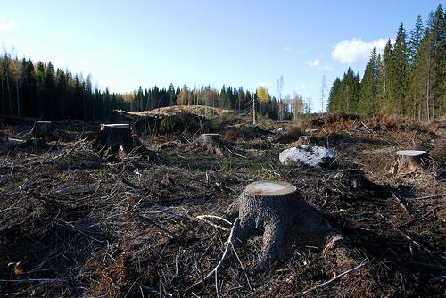 Zemlja je izgubila jednu četvrtinu biljnih i životinjskih vrsta u zadnjih 100 godina.